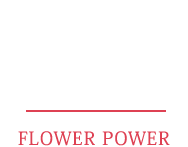 Baccarat of the Month