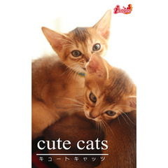 cute cats16 アビシニアン