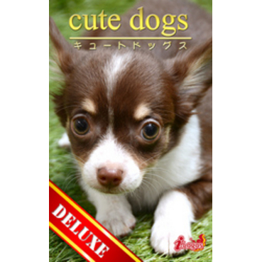 cute dogs DELUXE03 チワワ