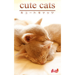 cute cats15 アビシニアン