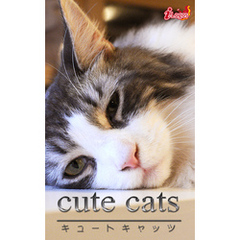 cute cats13 メインクーン