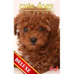 cute dogs DELUXE05 トイプードル