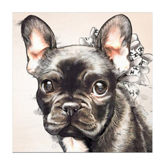 ポップアート Frenchie Bow Watercolor Black